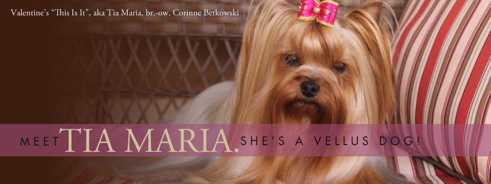 Meet Tia Maria Slide